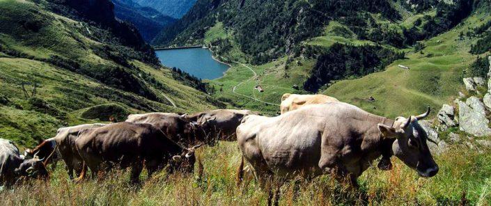 Hattusas SRL – consulenze geologiche e ambientali
