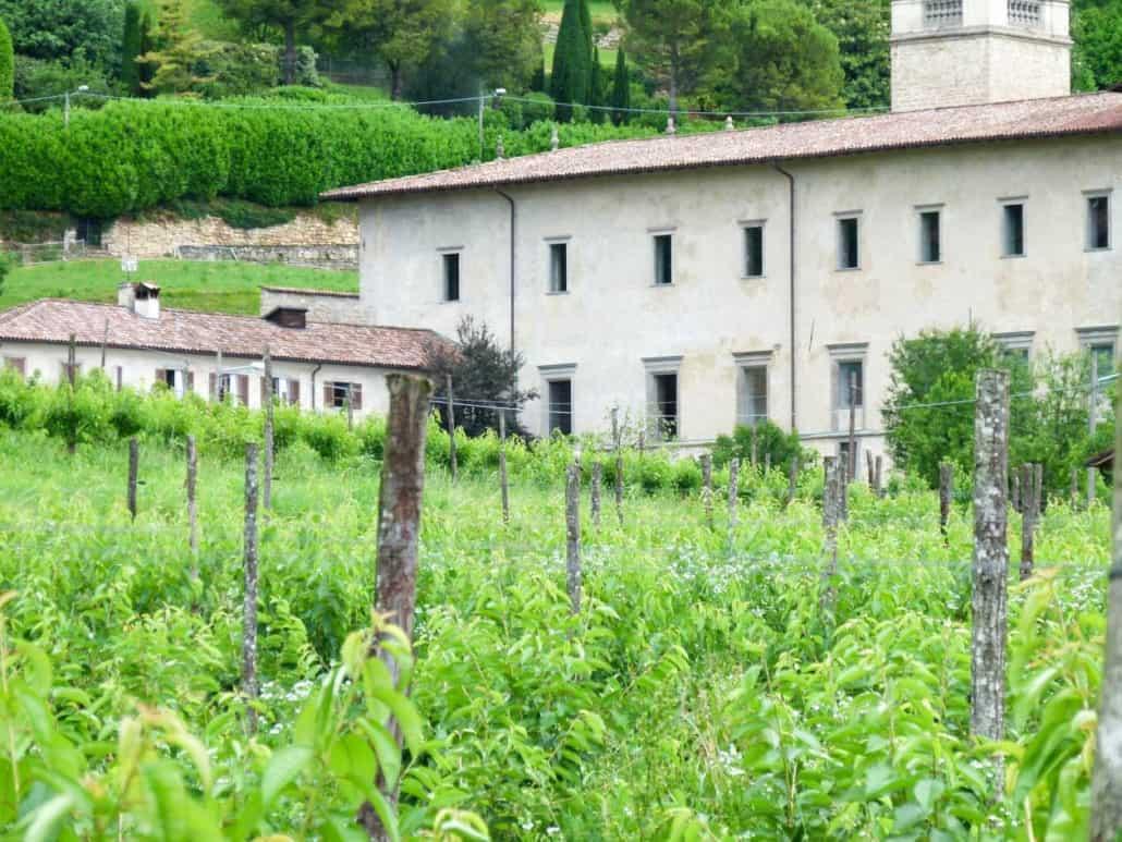 Hattusas - Bergamo - Valle d'Astino - maschio territoriale di Averla piccola, censito nel corso del rilievo di Giugno