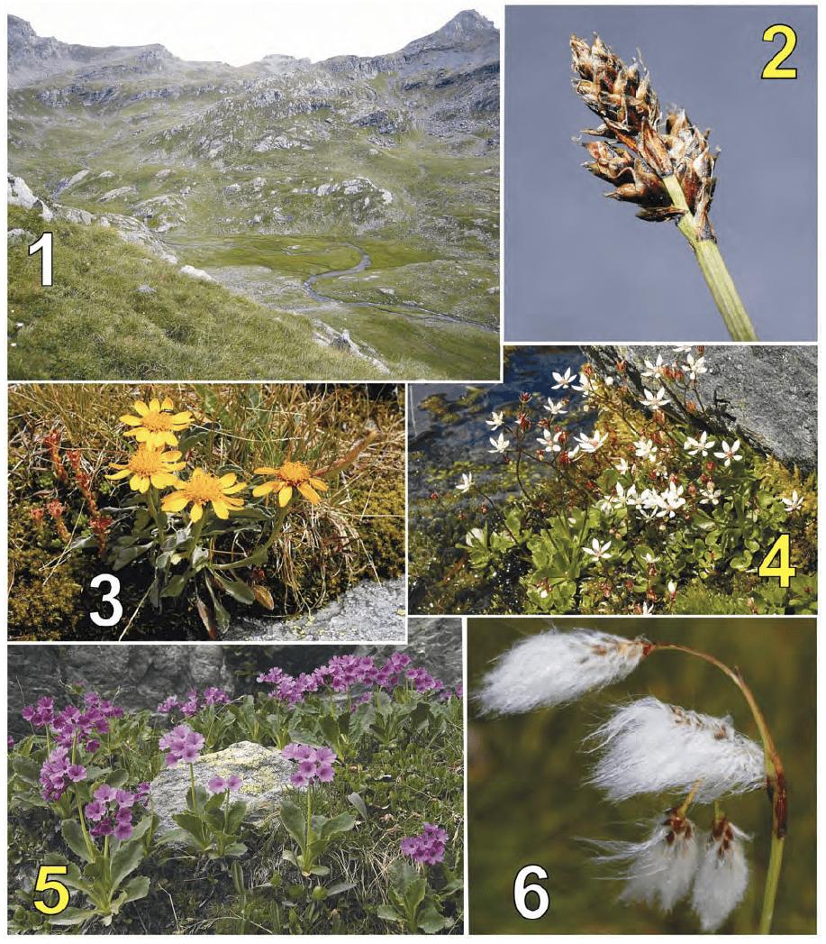 Visione dall'alto della piana del Gurie (1). Carex lachenalii (relitto glaciale, abbastanza raro sulle Alpi) presente nei pianori acquitrinosi (2). Senecio halleri, specie rara, xerofila, endemica delle Alpi occidentali (3). Saxifraga stellaris, comune nei pianori umidi (4). Primula latifolia, specie rara, abbastanza frequente sulle cengette rocciose dei versanti (5). Eriophorum angustifolium, specie rara delle zone fredde e umide circumboreali e articoalpine (5). Da ZACCARA, PEROSINO (2010).